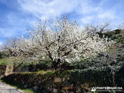 Cerezos en flor en el Valle del Jerte - paseo por Extremadura;botas de montaña barranquismo pueblos